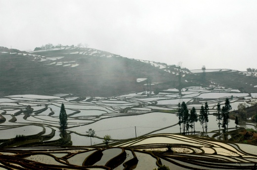 Misty rice padi fields, Yunnan, China