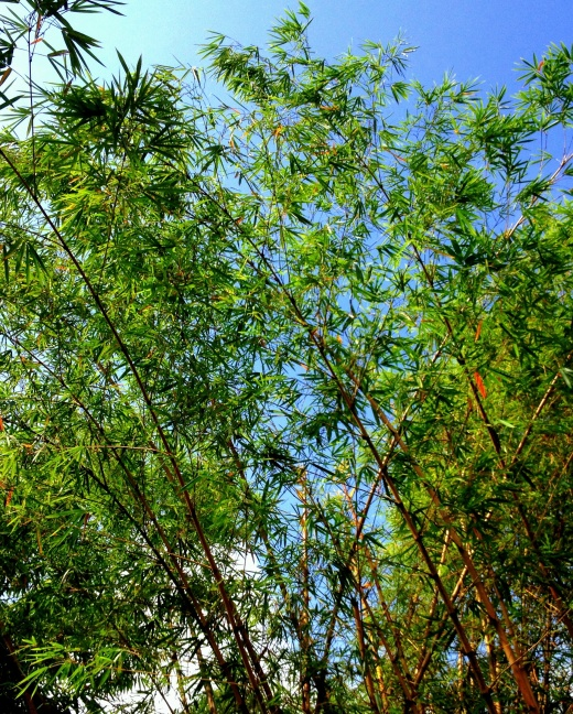 The Bamboo's Sway